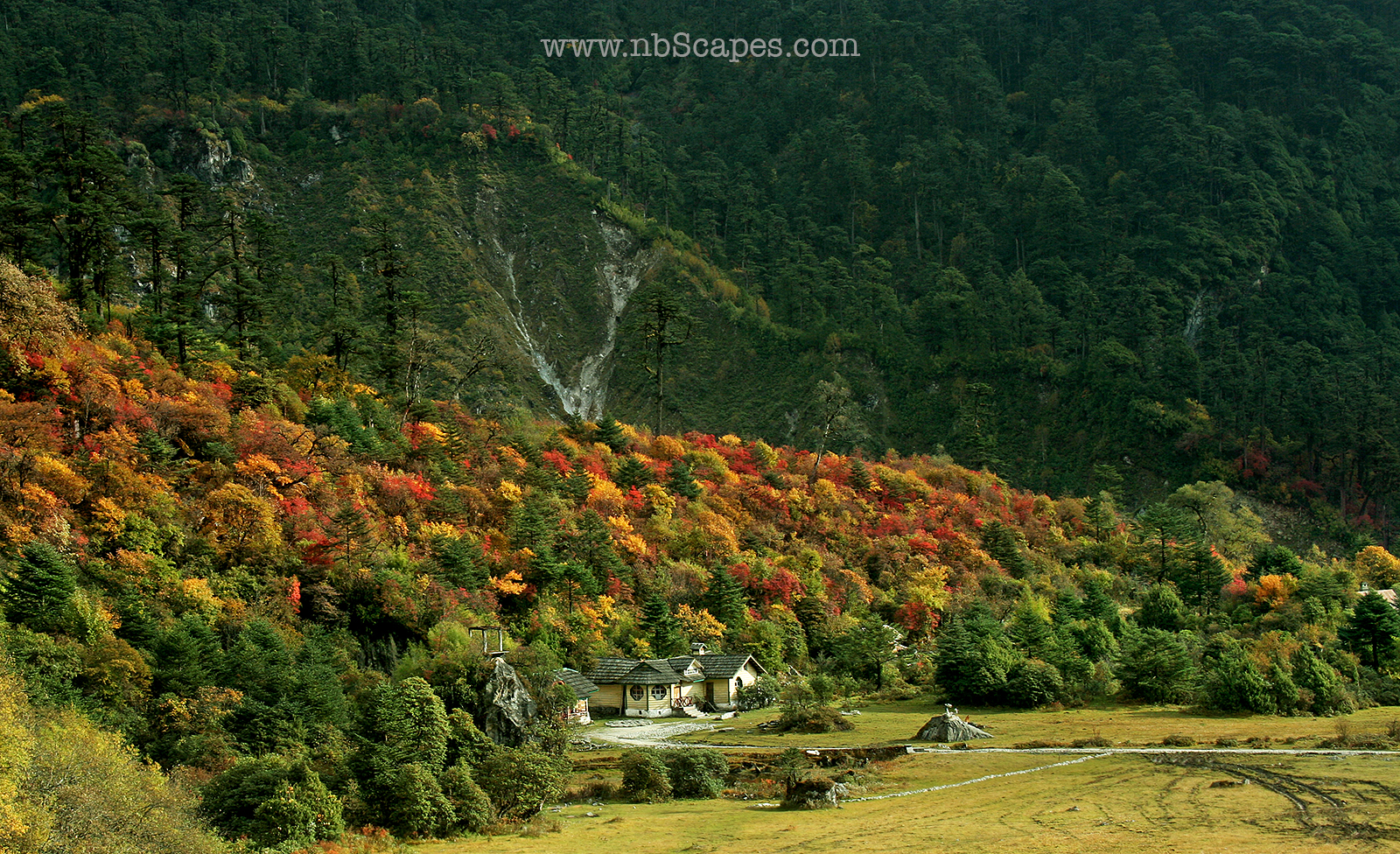 Sikkim Himalaya Fall Colours